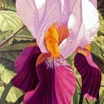 """""""Double Iris""""- 26"""" x 19"""" - Reduction Woodcut Print - Gordon Mortensen"""
