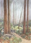"The Redwoods - 30"" x 22"" - Watercolor - Gerald Brommer"