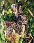 "Hare in Wheat Field - 16"" x 25"" - Watercolor - Charlotte Bixby Yep"
