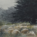 "Cypress Grove Near Cambria - 5"" x 8"" - Oil on Canvas - Gerald Brommer"