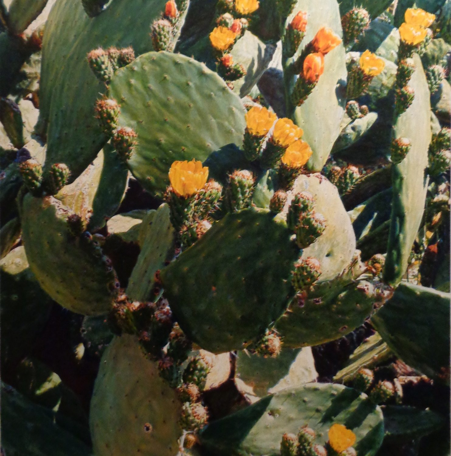 "Cactus - 28"" x 21"" - Oil on Canvas - Kurt Ard"