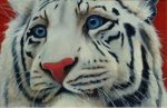 "White Tiger - 24"" x 36"" - Watercolor - Will Bullas"