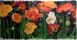 Icelandic Poppies - Watercolor - Charlotte Bixby Yep