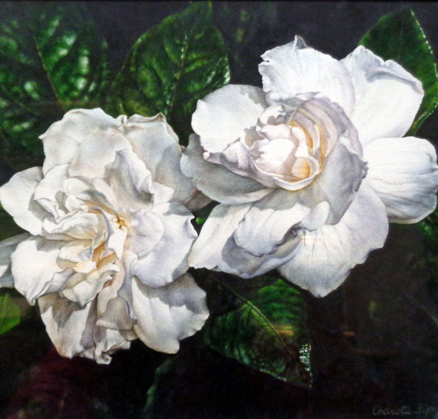 Two Gardenias - Watercolor - Charlotte Bixby Yep