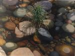 "Fall Stream | 36"" x 48"" 
