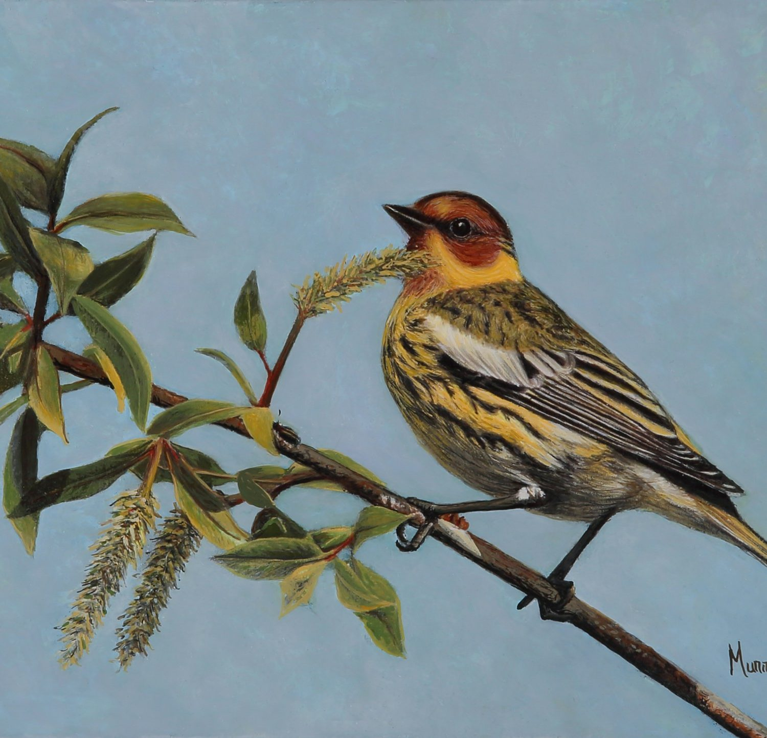 "Cape May Warbler | 6"" x 8"" 