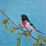 "Lovely Weather Rose Breasted Grosbeak | 8"" x 8"" 