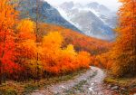 """Autumn in the Pyrenees 
