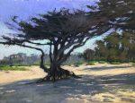 "Carmel Beach Cypress | 12"" x 16"" | Terri Ford"