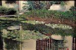 Water Garden Paradise | 24″ x 36″ | Jim Miller