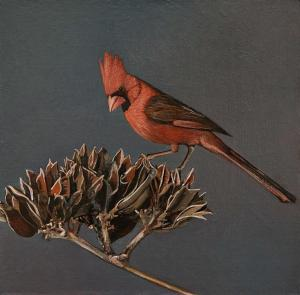 "Can't Stop Thinking About You Northern Cardinal Male | 8"" x 8"" 