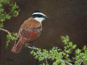 "Just Stopped by for a Look Great Kiskadee | 6"" x 8"" 