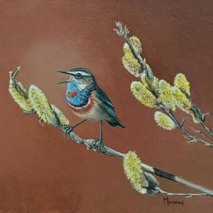 "Let Me Tell You All About It Blue Throated | 8"" x 8"" 