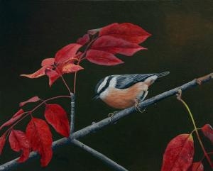 "Red Leaves Red Breasted Nuthatch | 8"" x 12"" 